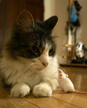 Hvem trenger vel fiender med slike venner? (Foto: Wendy Ingram and Adrienne Greene)