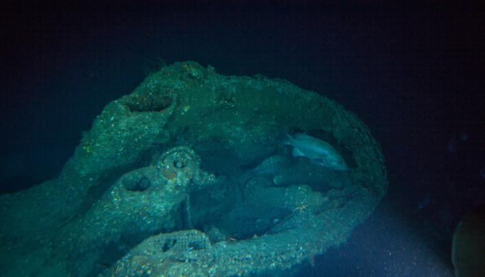 Tårnet til ubåten, med en av disse grouper-variantene svømmende rundt i tårnet.