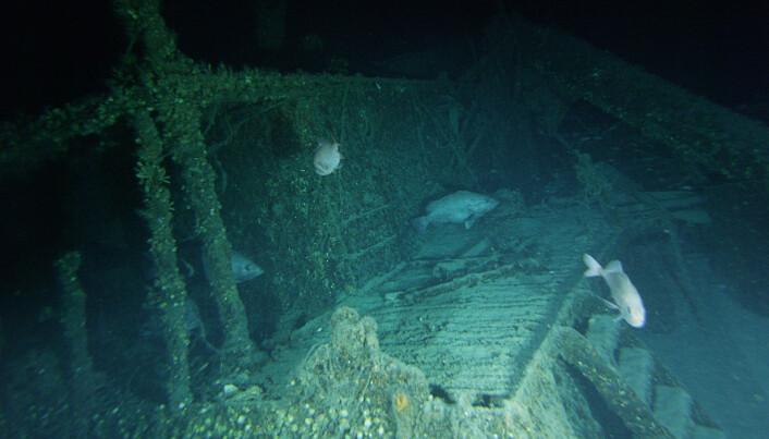 Akterområdet til skipet Bluefield. Her kan du også tydelig se fisken som stimler seg rundt framtredende partier av skipet.