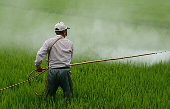 Rising use of nitrogen fertilisers could jeopardise global climate goals