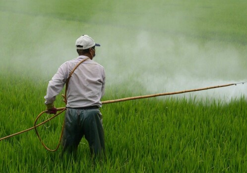 Rising use of nitrogen fertilisers could jeopardise global climate goals