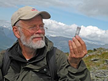 Arne Fjellberg på edderkoppjakt i alpine tørrenger i Vang i Valdres. Foto: (Foto: Privat)