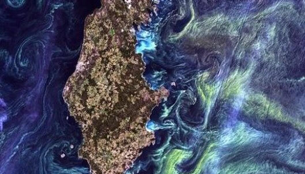 Algeoppblomstringen i Gotland, som vanligvis er et problem, var mye av det som gjorde at bildet ble kåret til det vakreste i en NASA-konkurranse. NASA synes mønstrene i bildet minner om van Goghs maleri 'Starry Night'. Bildet er tatt i juli 2005. EROS/USGS/NASA