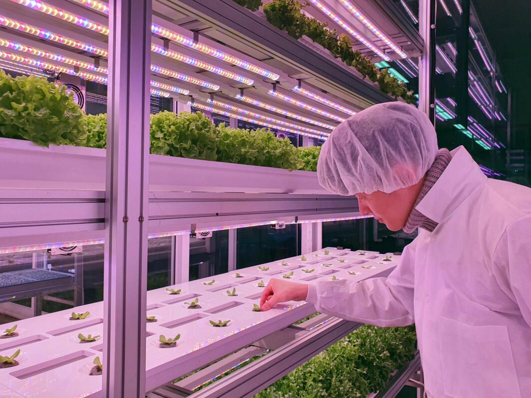 Med vertikalt landbruk er det designet et høyteknologisk system som imiterer fotosyntesen. LED-lamper sørger for at plantene kan vokse, og fallende priser på lampene bidrar til at det er mer lønnsomt å drive vertikalt landbruk i dag.