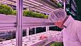 «Vertikalt landbruk» viser potensial: Skal framtidens grønnsaker dyrkes i høyhus?