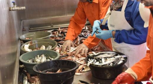 Næringsrik afrikansk fisk kan hindre skjult sult