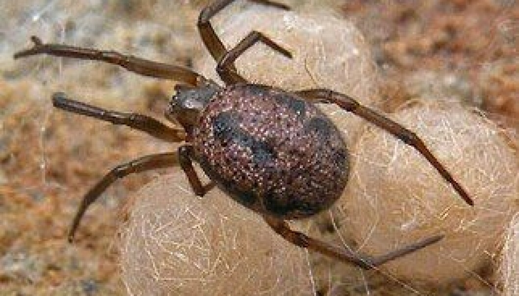 Edderkopper fra steppene