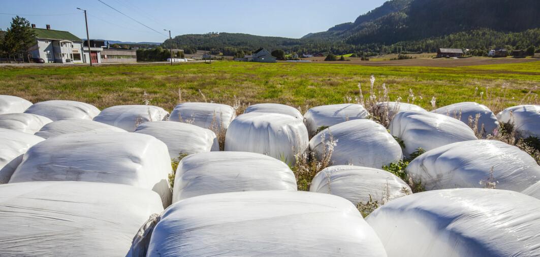 Plast fra slike rundballer er hovedårsaken til plastforurensingen i norske lakseelver, viser en ny undersøkelse.