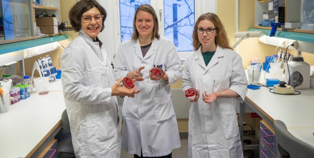 På dette laboratoriet oppdaget forskerne den nye bakterien. Fra venstre: Pauline Cavanagh, Runa Wolden og Maria Pain.