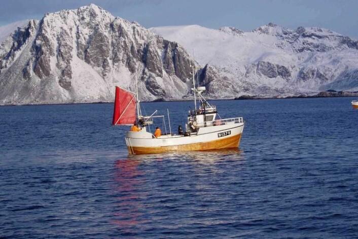 """Tradisjonelt fiske medfører både utslipp av eksos og motorstøy – noe som er en HMS-belastning for fiskerne. Her fiskes det med garn fra tresjarken """"MK Bårskjær"""" i Henningsværstraumen. (Foto: Hallvard Aasjord)"""