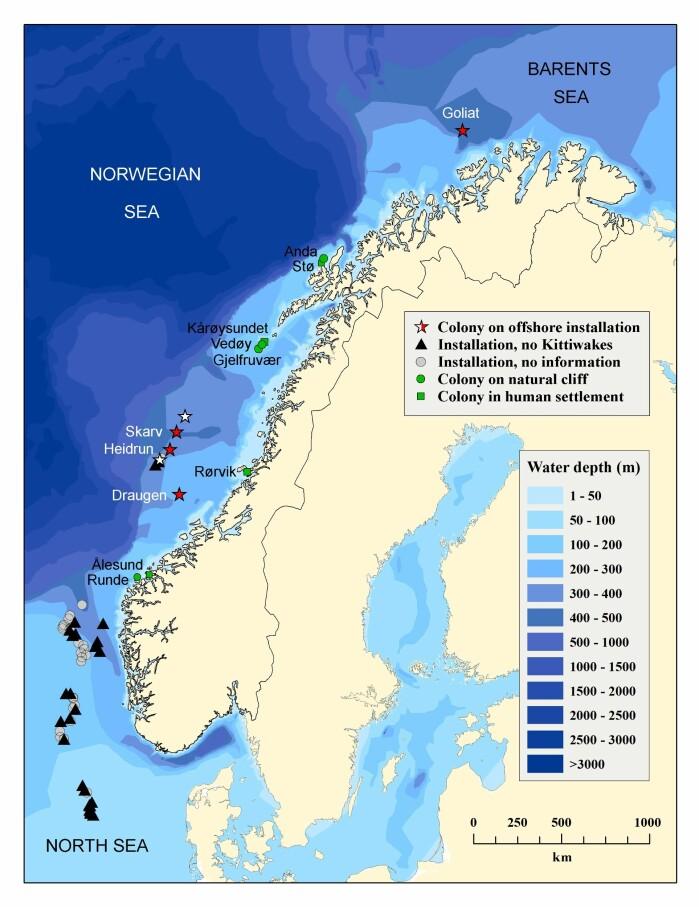 Kart over koloniene som inngikk i studien. Oljeinstallasjoner til havs med hekkende krykkjer er angitt med stjerner, og de som er farget røde ble inkludert i studien av hekkesuksess.
