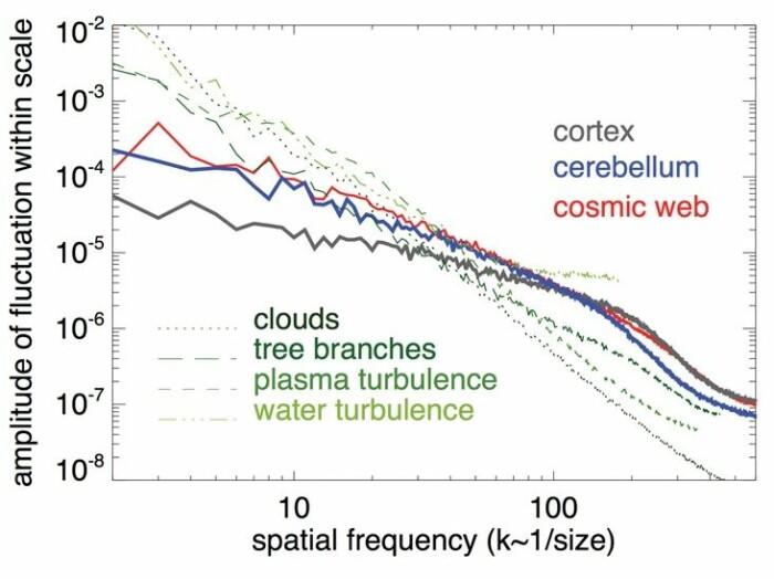Svingninger i storehjernen (cortex), lillehjernen (cerebellum), Universet, skyer, blader, plasma og vann.