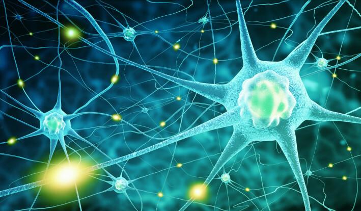 Digital illustrasjon av av nervesystemet i hjernen.
