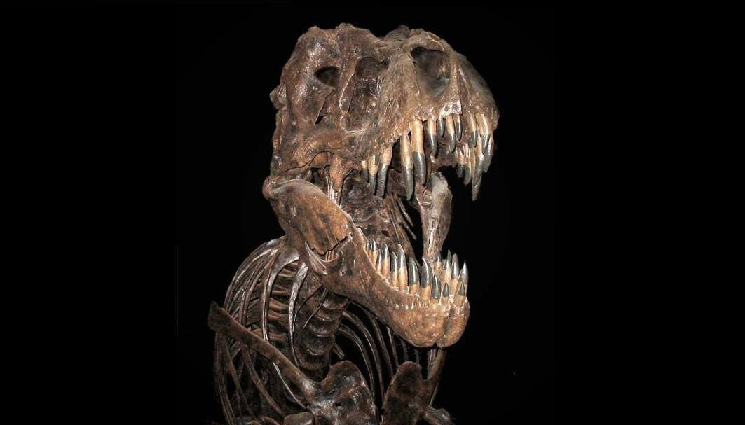 Tyrannosaurus Rex ble diger. Vokste den i samme takt som andre dinosaurer?