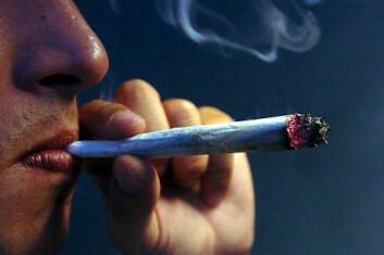 Det endocannabinoide systemet har navnet sitt fra ordet cannabis. Det er de samme signalveiene som stimuleres når man spiser fet mat som når man røyker cannabis. Aktivering av det endocannabinoide systemet gjør at cannabisrøykere får en voldsom trang til å spise fet mat. (Foto: Colourbox)