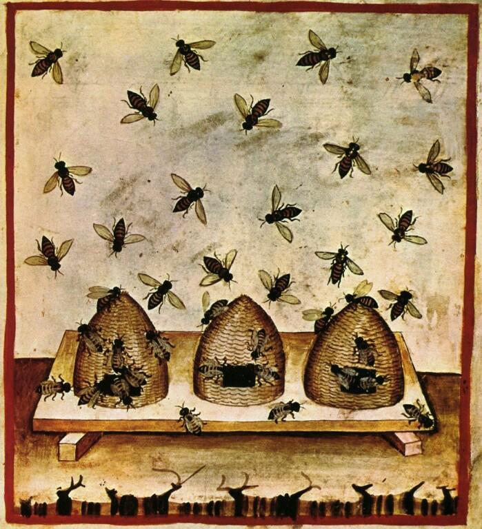 Bier og bikuber på illustrasjon fra 1300-tallet.