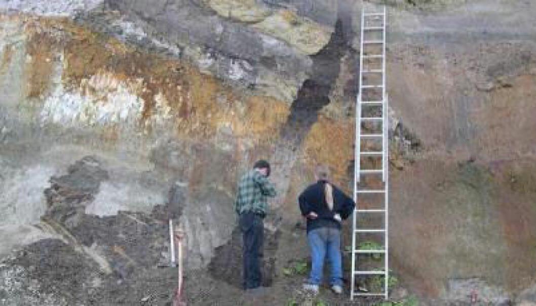 Her i leirskrenten ved Trelde har professor Bent Odgaard funnet en hittil ukjent mellomistid i Danmark. Lagene er 340 000 år gamle. Bent Odgaard
