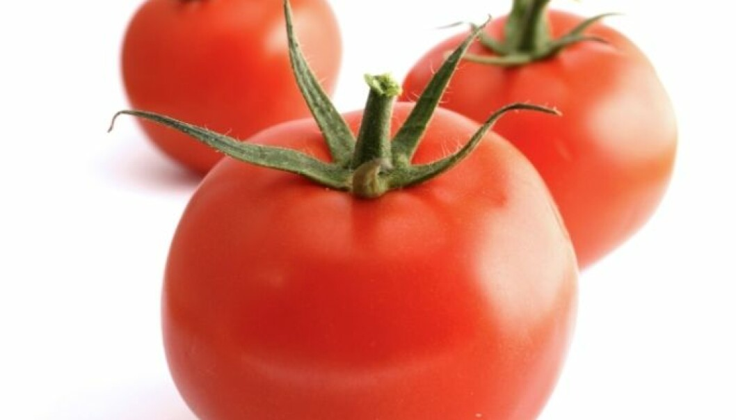 Prydplanter trugar tomatane