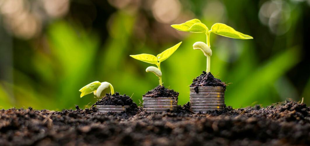 Det er ikkje berre vi menneske som set til sides ein penning eller to i banken! Plantene har òg sin måte å legge til sides til ein annan gong. Foto: Shutterstock.