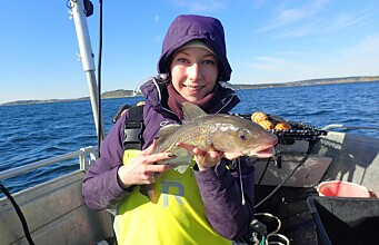 Not many big cod left in the Oslo Fjord