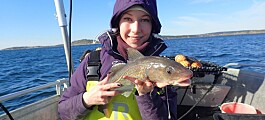 Få store torsk igjen i Oslofjorden
