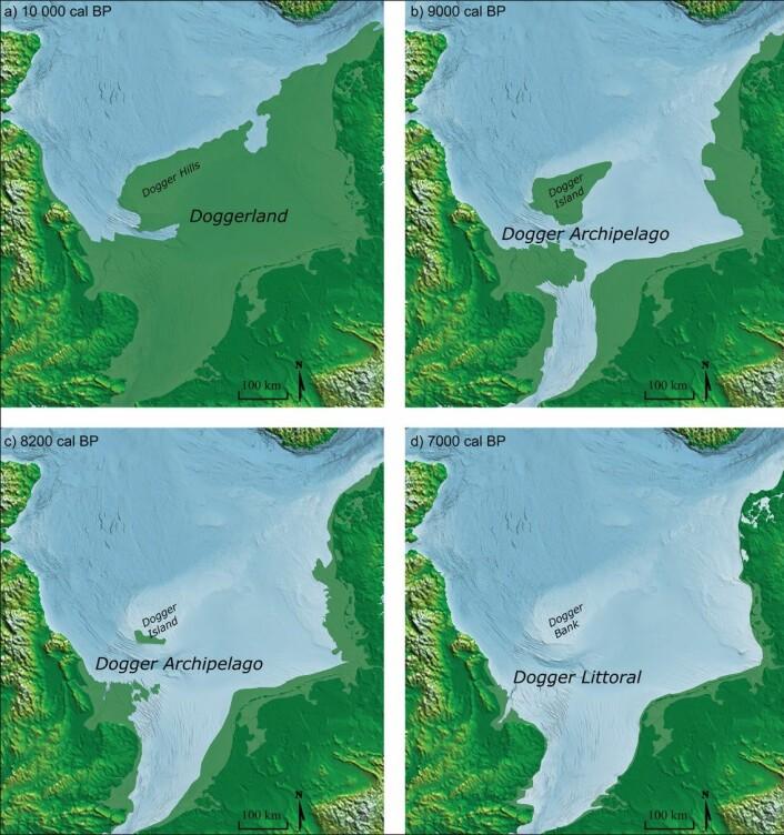 Denne figuren viser først selve Doggerland for omtrent 10 000 år siden (a). Etter at havet begynte å stige, ble mer og mer av landet dekket av vann. Rett før tsunamien (c), var mye allerede borte, ifølge den nye artikkelen. De lysegrønne feltene på kartet viser land som nå ligger under havet.