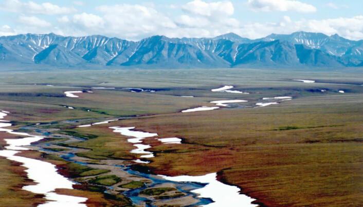 Det har i flere tiår vært diskutert å åpne kystsletten av Alaskas Arctic National Wildlife Refuge, som kalles area 1002, for oljeboring.