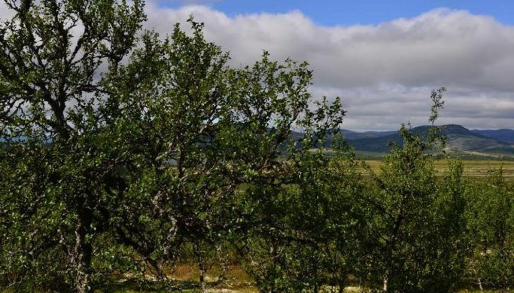 Anders Bryn/Skog og landskap