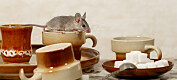 Kaffe er bra for musehelsa