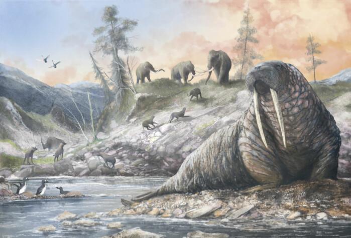 Hvalross, mammut og hyener var blant dyrene som levde i Doggerland.