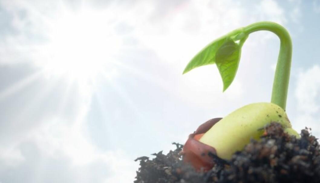 Plantenes betydning i våre liv