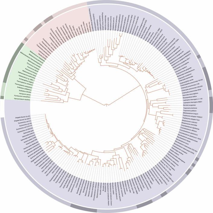 Her vises slektskapet mellom artene som hadde fått sitt DNA sekvenserte i 2006. Midtpunktet i sirkelen representerer den felles forfaren til alle levende skapninger. Fargene i ringen viser de tre hovedgruppene av liv: De rosa artene er eukaryoter (dyr, planter og sopp), lilla viser bakterier og grønt representerer arkebakterier. (Foto: (Illustrason: Ivica Letunic/Wikimedia Commons))