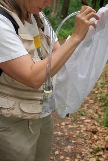 Slik ser en aspirator ut når den brukes i praksis. En omtrent lik innretning ga forskeren Paul Hurd over 50 insekter i nesa. (Foto: Fritz Geller-Grimm/Wikimedia Creative Commons)