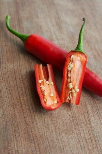Chili inneholder et stoff som kalles capsaicin. Det er dette stoffet som gir den brennende fornemmelsen i munnen når man spiser sterk mat. Nyere forskning viser at chilien kan ha vært brukt til å lage sterke drikker i Mexico i mer enn 2000 år. (Foto: Colourbox)