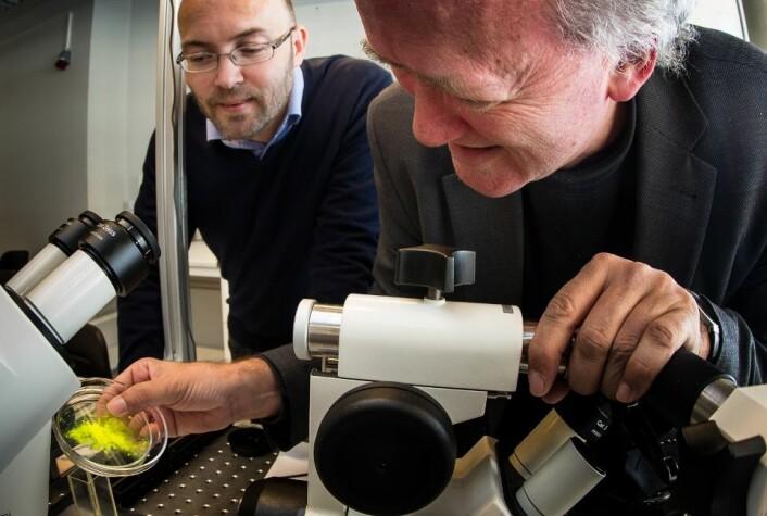 De to norske fysikkprofessorene Jon Otto Fossum (til høyre) og Paul Dommersnes lager mosaikk-kapsler som kan få betydning innenfor alt fra medisin til malingsproduksjon. (Foto: Per Harald Olsen, NTNU)