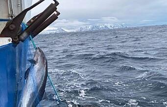 More than 2,800 porpoises die slowly in Norwegian fishnets each year