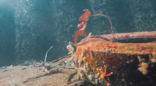 Vellykket rydding i gamle miljøsynder langs kysten