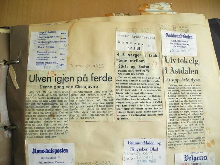 Det var fleire som rapporterte inn til avisene om sine ulveobservasjonar. Her er utklipp frå notiser som stod på trykk i diverse lokalviser på tidleg 1960-tal. (Foto: (Frå Direktoratet for naturforvaltning sitt klipparkiv))