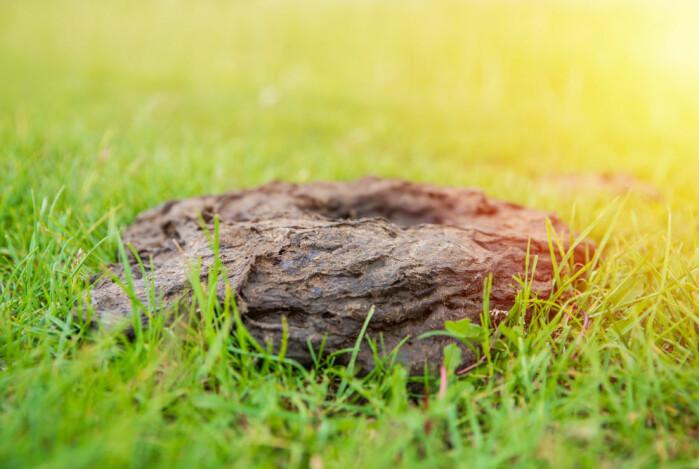 Forskerne fant ulike arter i kurukene alt etter om de lå på lysninger eller i skogen. Alle de 10 kurukene som ble undersøkt, kom fra Mols-laboratoriet i Mols Bjerge, der kyr lever fritt hele året rundt.