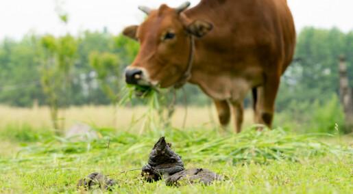 «Helt utrolig»: DNA-detektiver avslører rikt dyreliv i kuruker