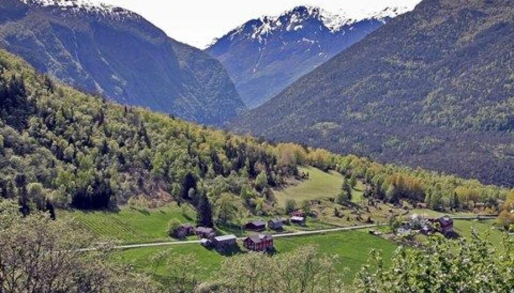 John Yngvar Larsson / Skog og landskap