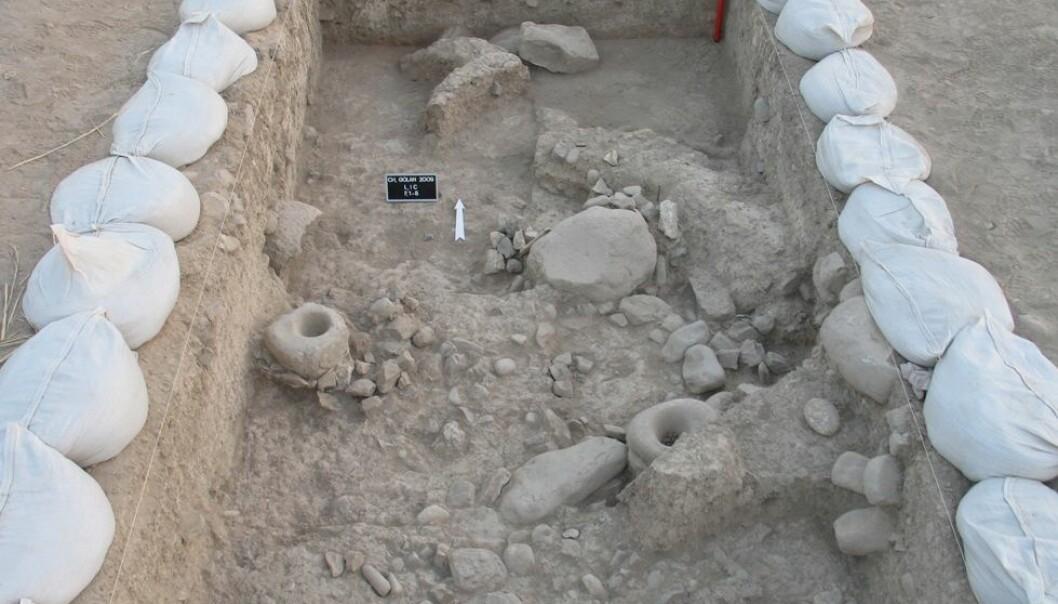 I Iran, på et arkeologisk funnsted kalt Chogha Golan, er det funnet rester etter sanking og bruk av både ville og dyrkede kornsorter. Det antyder at jordbruket kan ha oppstått samtidig på flere steder i den fruktbare halvmåne i Midtøsten. TISARP/University of Tübingen