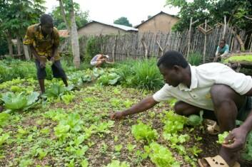 Grønnsakdyrkere i en bakgård i Kandi. (Foto: Arnstein Staverløkk)