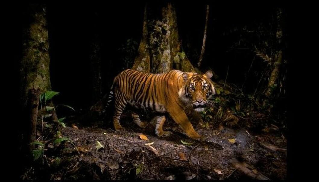 - Dette er naturfotografiens Oscar
