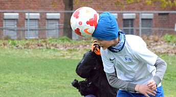 Fotballspelarar får hovudskadar, men kor mykje kjem av nikking?