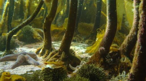 Norsk kystvann er under press: Nødvendig med krafttak for flere arter