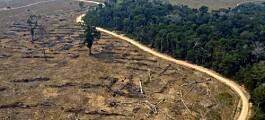 8 prosent av Amazonas er ryddet siden 2000
