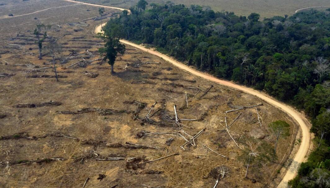 Norge har siden 2008 bidratt med hele 8,3 milliarder kroner for å bremse hogsten i Amazonas, som et ledd i arbeidet med å redusere utslipp av klimagasser.