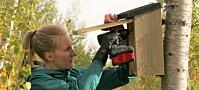 Nå henger forskerne opp hundrevis av fuglekasser ved grensen til Russland