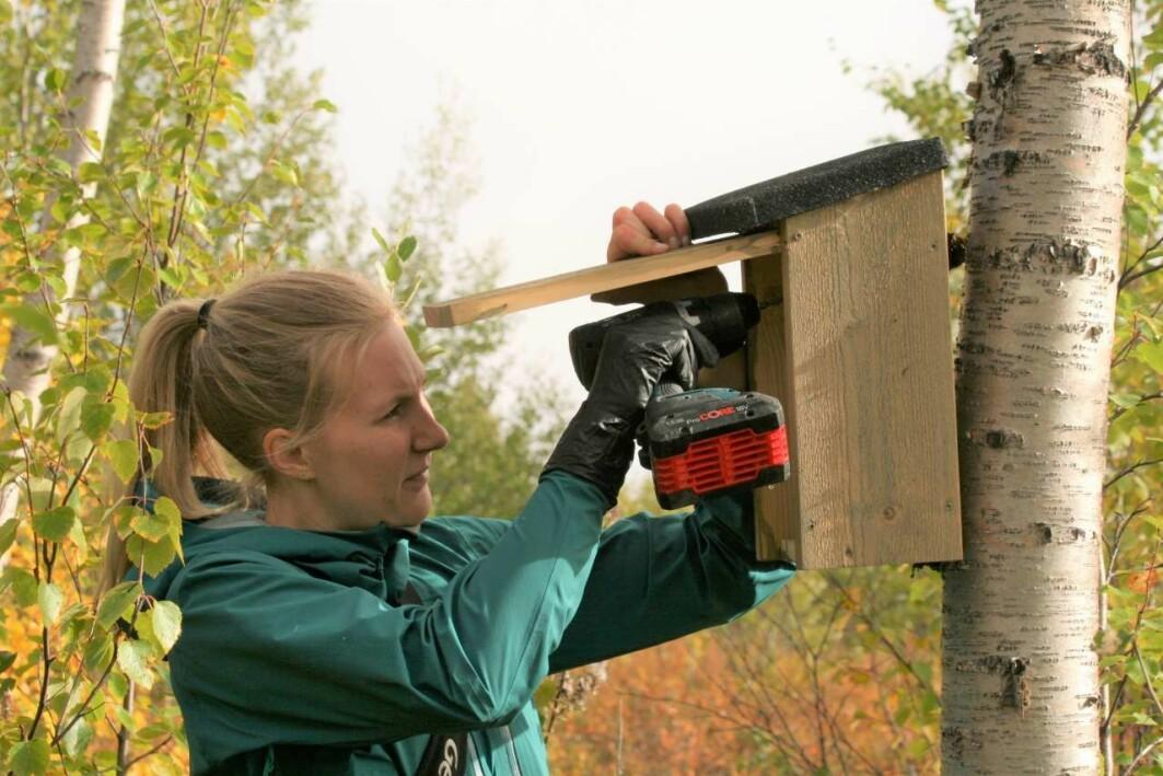 Forsker Benedicte Beddari i ferd med å henge opp en av flere hundre nye fuglekasser i Sør-Varanger kommune.